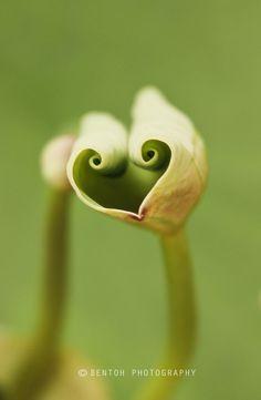 .leaf. find romantic  songs. design your musical journey www.muzikool.com