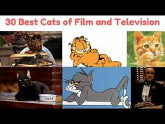 30 Best Cats of Film and Television Big Cats, Cool Cats, Cat Lady, Winnie The Pooh, Disney Characters, Fictional Characters, Kittens, Training, Film
