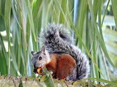 Upload your best active weather photos and videos or watch them in our new searchable gallery. Cute Squirrel, Animals Of The World, Rodents, Little Ones, Costa, Toddlers