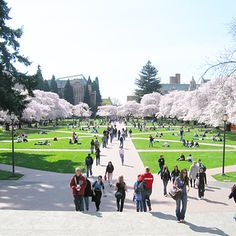 University of Washington, Seattle | 41 Scenic College Campuses That Were Made For Instagram