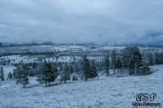 Snowy morning in Dunraven Pass, Yellowstone NP