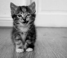 I'm not a cat person...but this little one's too cute not to share :)