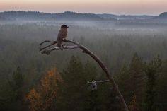 Metsän tarina on luontodokumentti suomalaisesta metsästä. Stars At Night, Bald Eagle, National Parks, Scenery, Birds, Nature, Pictures, Painting, Animals