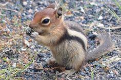 yellowstone animals | Yellowstone wildlife spotting