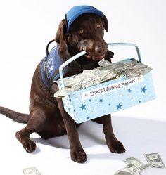 Ambassador Doc-Barker- A registered therapy dog & Canine Ambassador for Make-A-Wish Foundation!