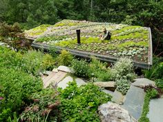 Mill Valley Cabin...a rooftop garden! This type of roof has a special name, but I can't recall it...