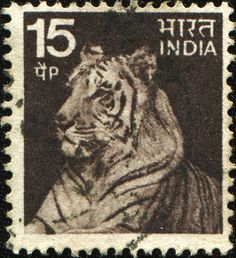 INDIA - CIRCA 1974: A stamp printed in India shows tiger, circa 1974.  Copyright: IgorGolovniov