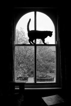 Cat and window garden