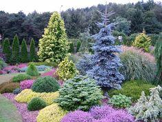 60 Beautiful Front Yards And Backyard Evergreen Garden Design Ideas - artmyideas Evergreen Landscape, Evergreen Garden, Evergreen Shrubs, Alpine Garden, Front Yard Landscaping, Landscaping Ideas, Garden Shrubs, Garden Pictures, Plantar