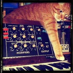 Synth Cat