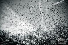 Más vale un pájaro en mano, que 100 volando.