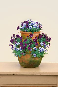 Perfect For Strawberry Jars - Pansies & Viola Gardens - Southern Living Perfect For Strawberry Jars Give your violas a lift by planting them in strawberry jars. 'Sorbet Plum Velvet' and 'Sorbet Icy Blue' violas create an especially striking combination. Container Flowers, Container Plants, Container Gardening, Gardening Tips, Vegetable Gardening, Organic Gardening, Fall Containers, Succulent Containers, Full Sun Plants