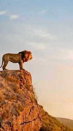 The Lion King, Mufasa, Simba, Wallpaper Lion Wallpaper, Animal Wallpaper, Disney Wallpaper, Lion King Pictures, Lion Images, Lion Photography, Lion King Art, Black Lion, Le Roi Lion