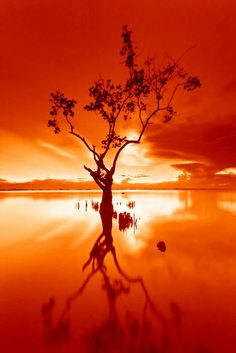 This image full of reds and oranges conveys a sense of warmness to the photograph. I would expect it was hot when the image was taken, whereas if it was blue, I would expect it to be chilly. Orange Aesthetic, Aesthetic Colors, Rainbow Aesthetic, Orange Yellow, Orange Color, Cool Pictures, Cool Photos, Orange You Glad, The Villain