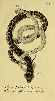 Herrn de la Cepede's Naturgeschichte der Amphibien, oder der enerlegenden vierfussigen Thiere und der Schlangen  - Weimar :Verlage des Industrie = Comptoir's,1800-1802..