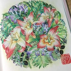 Coloured by using Faber Castell Polychromos color pencils #floribunda…