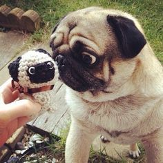 Pug meets his twin - i took a pic of beebee like thisss lol