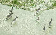 Kalahari Revisited: Zack Seckler's 'Botswana' Photography Exhibition