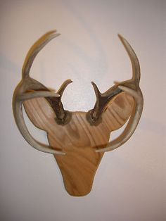 Rackheads Deer Buck Antler mounting plaque kit. Works w/ sheds. Moose & Elk avai