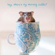 Morning Coffee   Flickr - Photo Sharing!