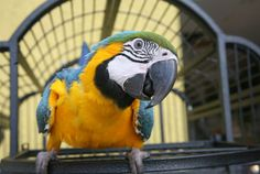 This will choke up any parrot owner!  Top 5 Reasons to get a pet bird