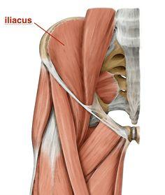 iliacus muscle yoga anatomy
