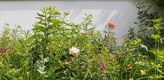 stadstuin Leiden - Denkers in TuinenDenkers in Tuinen | Ontwerpers van stijlvolle en tijdloze tuinen