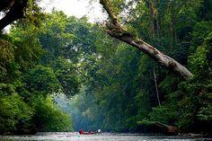 Taman Negara – Malaysian jungle
