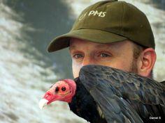 Cóndor Chileno Condor, Bald Eagle, Owl, Animals, Pictures, Animales, Animaux, Owls, Animal