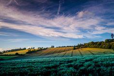 North Downs Way, Surrey Hills, England, UK