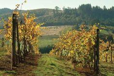 Oregon wine country