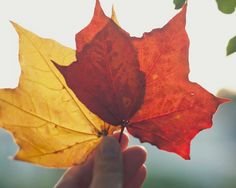 Nature photograph - fine art photography print -  red yellow golden leaves fall autumn home decor - Autumn in my hands by photographybykarina on Etsy