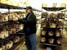 Paul Stamets with Shiitake (Lentinula edodes) in Fungi Perfecti Growroom Mushroom Plant, Mushroom Spores, Mushroom Cultivation, Horse Manure, Growing Mushrooms, Fast Food Chains, Raised Garden Beds, Permaculture, Fungi