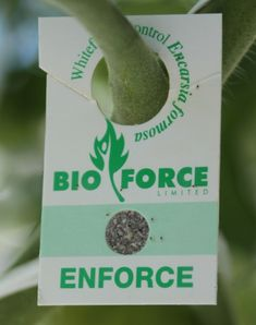 Bioforce markets Encarsia formosa wasps as Enforce™. formosa nymphs are packaged in cardboard tags that growers hang from plants. Online Newsletter, Bug Off, Ministry Of Education, Island Nations, Garden Pests, Mussels, Wasp, Myrtle, Horticulture