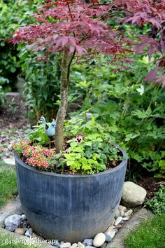Japanese Maple Planter with annuals and alpine strawberries (at kid height).