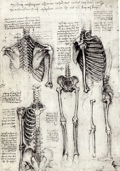 Click to enlarge image anatomia_2.jpg