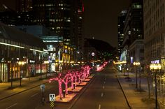 Downtown Montreal - Light by Night McGill College Avenue Montreal Quebec, Night Photos, Parcs, Wild Life, Toronto, College, Wall Art, Eyes, Travel