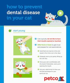 Simple Tips For Keeping an Eye on Your Cat's #Dental #Health - #cats