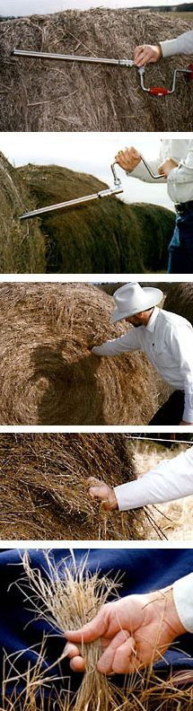 Sampling Hay and Standing Forage Farm Town, Management, Beef, Range, Ideas, Meat, Cookers, Thoughts, Steak