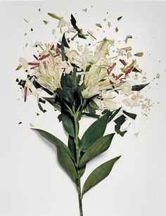 Smashed Flowers, these are all great - http://www.thisiscolossal.com/2012/09/flowers-soaked-in-liquid-nitrogen-shatter-on-impact