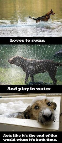 Dog water logic…And then you get the ones who run away from a glass of water