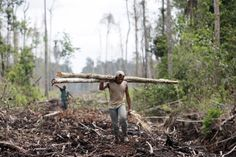 Illegal logging and mining operations, large-scale agricultural plantations, slash-and-burn farming methods and wood collection for fuel, are among the main causes of deforestation.