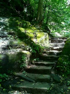 Turkey Run State Park in Indiana - Ahhhh! So many steps and ladders!