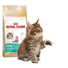 Alimento específico para #gato #MaineCoon  #Maskokotas #RoyalCanin #gato #cat Kitten-Maine Coon 36 Royal Canin Maskokotas