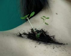 Body seeding plant