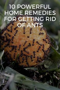 How to get rid of ants. 10 powerful home remedies for getting rid of ants - Get rid of those pesky ants without harsh and harmful chemicals! Natural pest control | Non-toxic Pest Control