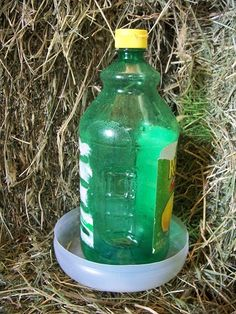 Slap together a homemade chick waterer rather than buying a new plastic one.