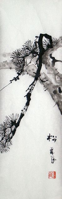 Pine study 08 by clouddragonart, via Flickr