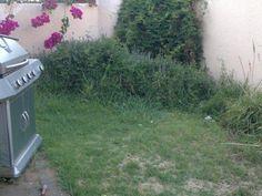 Garden Free State, Garden, Plants, House, Ideas, Garten, Home, Lawn And Garden, Gardens