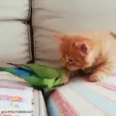 This is mean but it's cute too ! - Cute cats and kittens - Adorable Animals Cute Funny Animals, Cute Baby Animals, Animals And Pets, Funny Cats, Funny Birds, Cute Kittens, Cats And Kittens, Beautiful Cats, Animals Beautiful